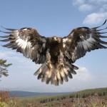 Eagle Wisdom©